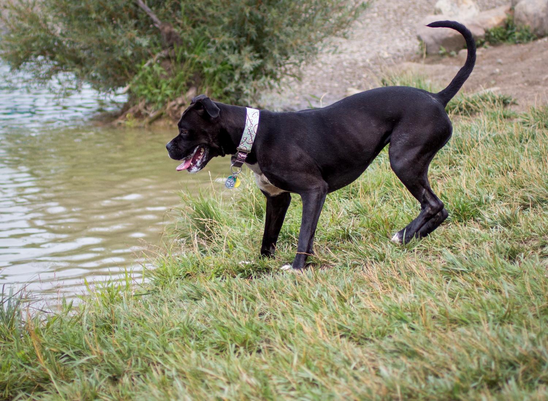 Canine Meadows-9.jpg