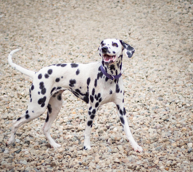 Canine Meadows-13.jpg