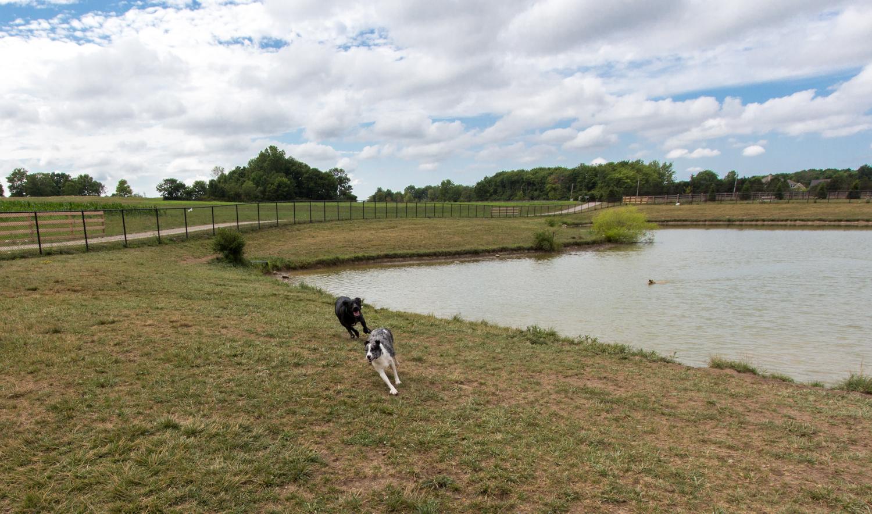 Canine Meadows-15.jpg