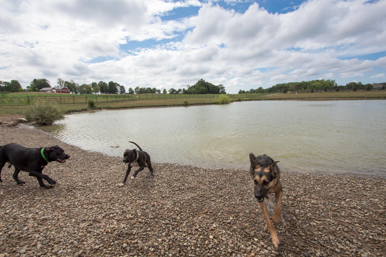 Canine Meadows-16.jpg