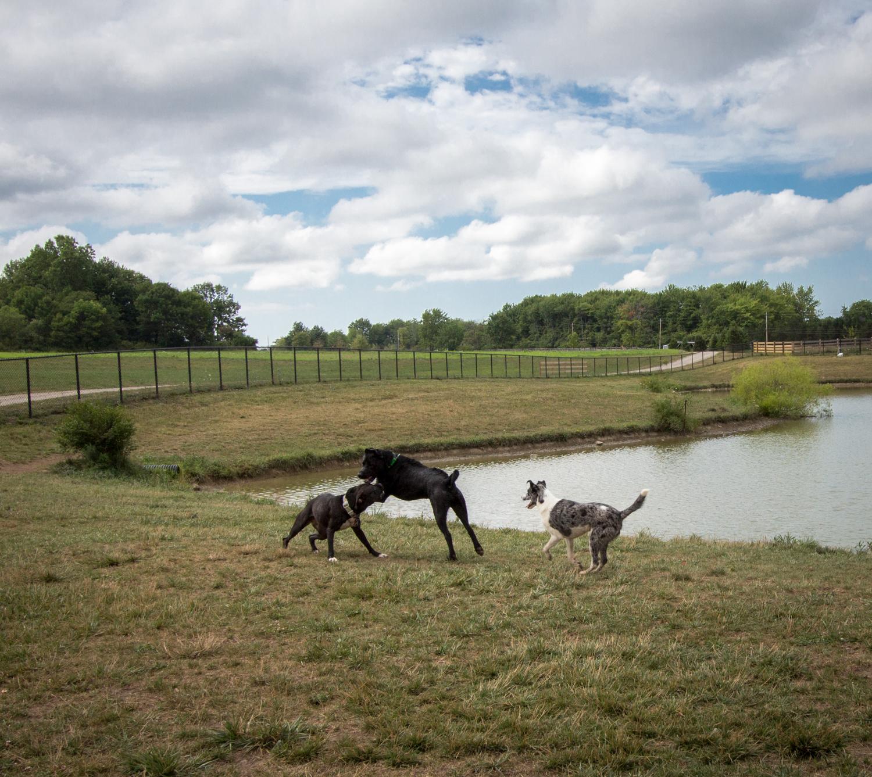 Canine Meadows-17.jpg