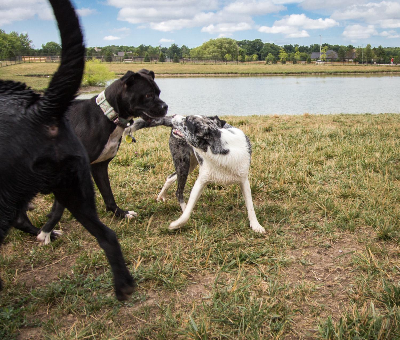 Canine Meadows-18.jpg