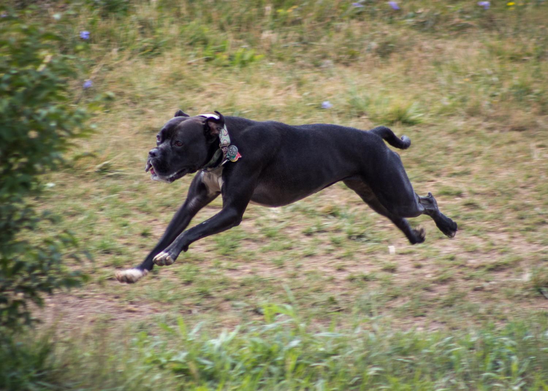 Canine Meadows-20.jpg