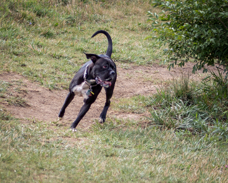Canine Meadows-21.jpg