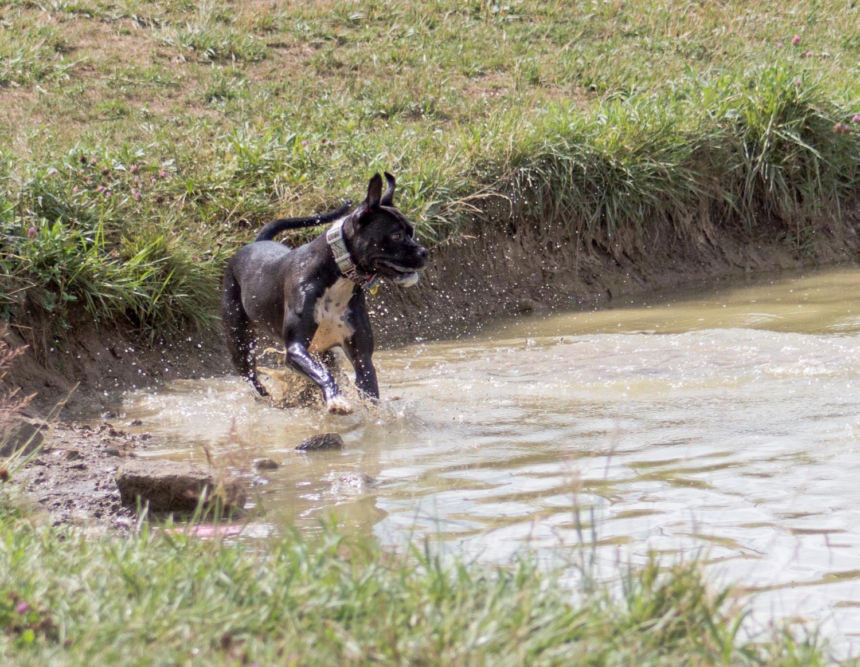 Canine Meadows-24.jpg