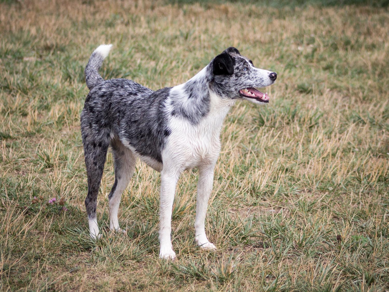Canine Meadows-23.jpg