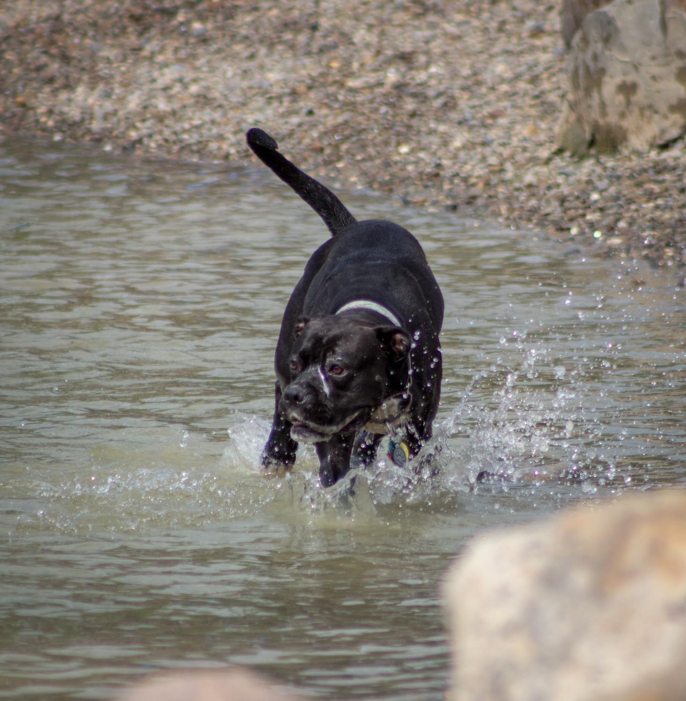 Canine Meadows-27.jpg