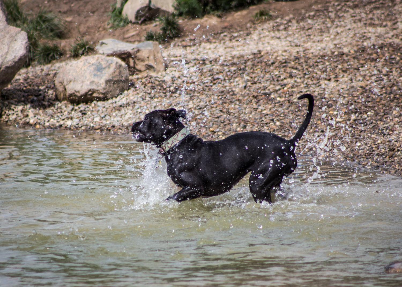 Canine Meadows-28.jpg