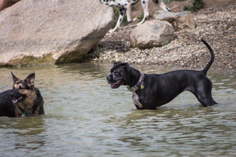 Canine Meadows-29.jpg