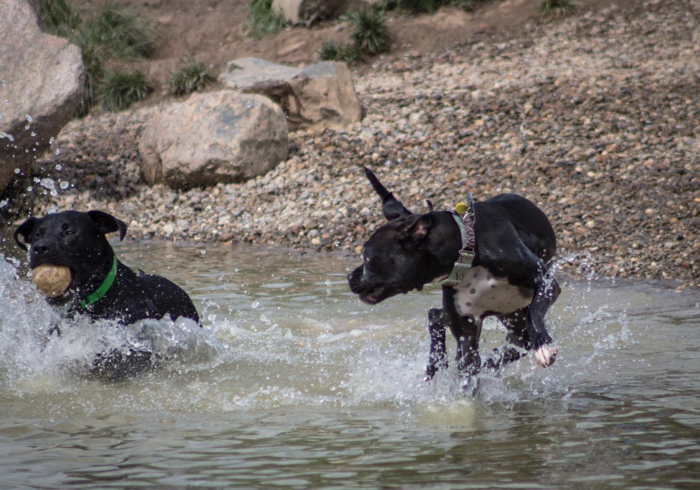 Canine Meadows-30.jpg