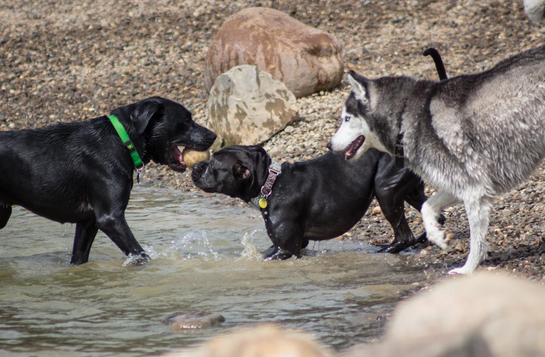 Canine Meadows-31.jpg