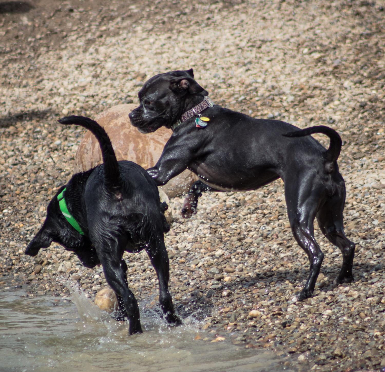 Canine Meadows-32.jpg