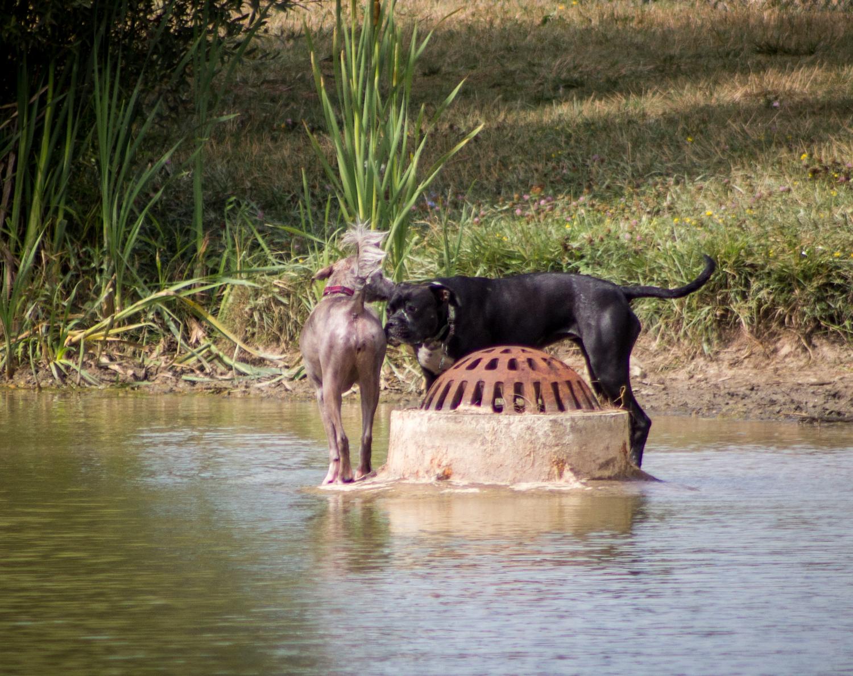 Canine Meadows-36.jpg