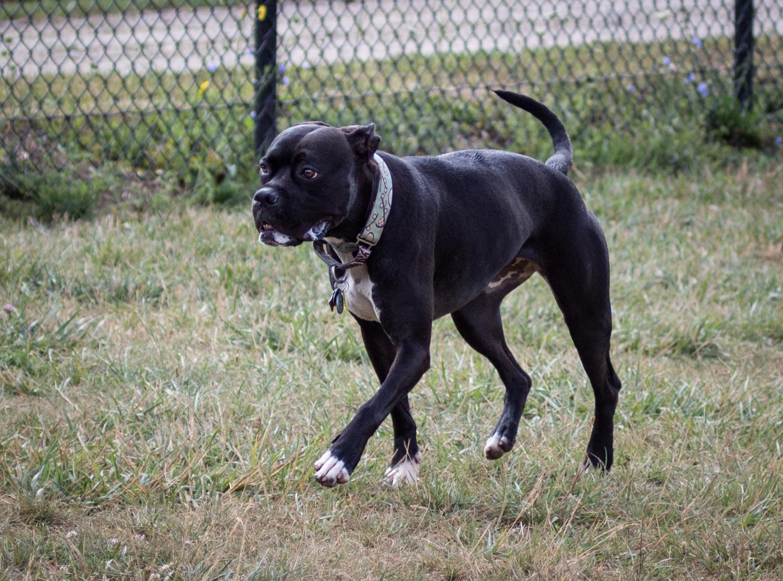Canine Meadows-37.jpg