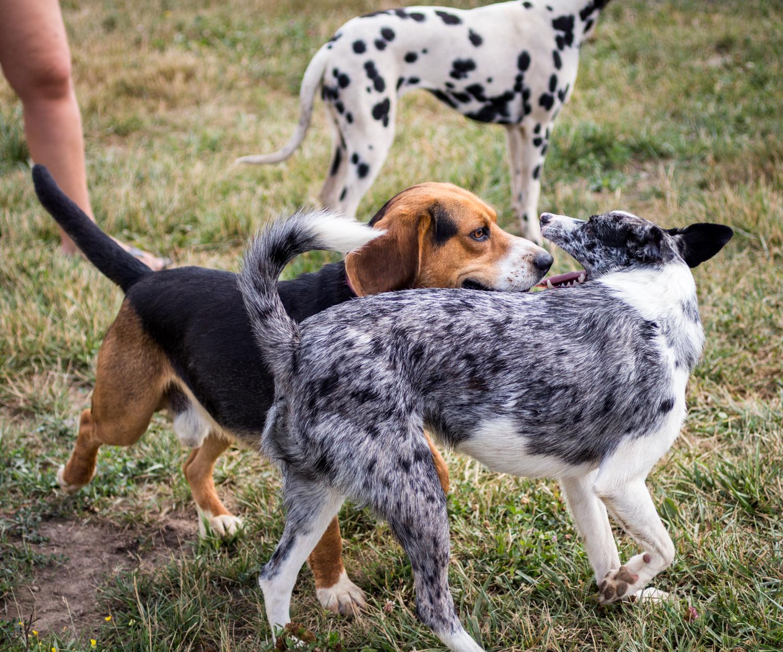 Canine Meadows-38.jpg