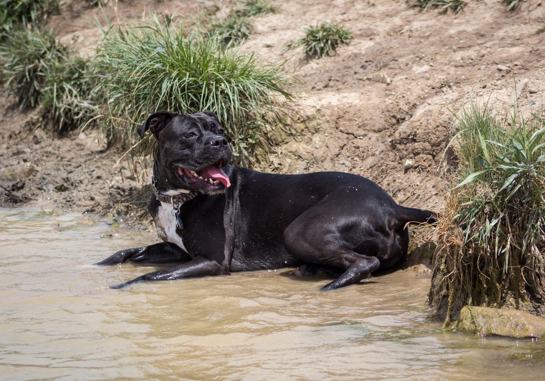 Canine Meadows2-1.jpg