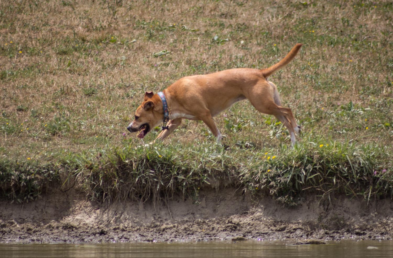 Canine Meadows2-3.jpg