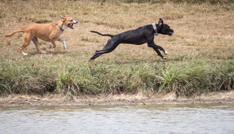 Canine Meadows2-6.jpg