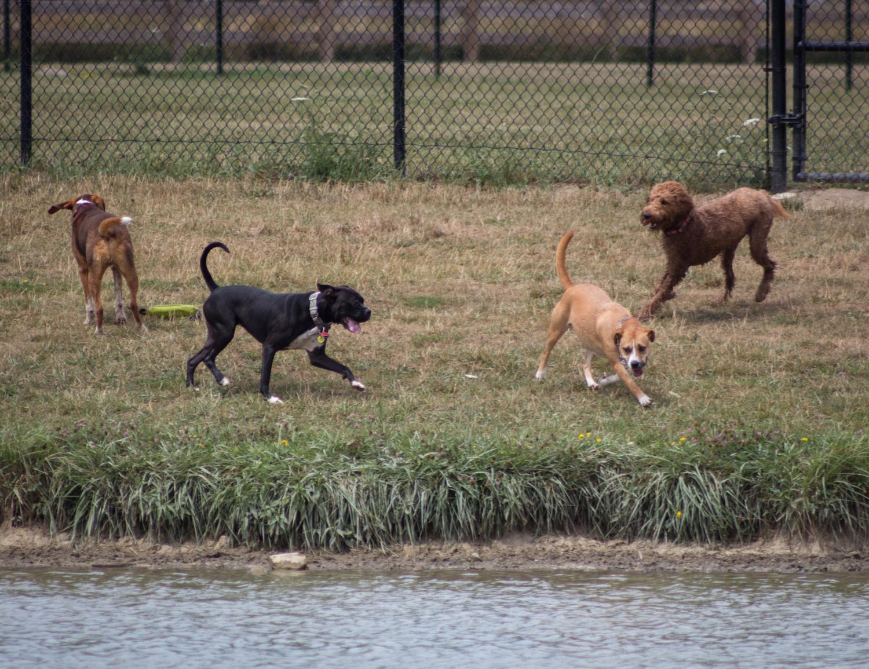 Canine Meadows2-5.jpg