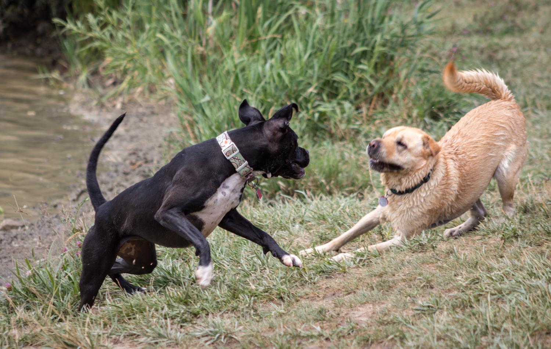 Canine Meadows2-8.jpg