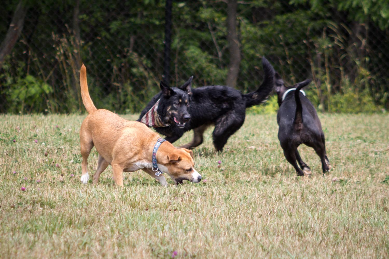 Canine Meadows2-12.jpg