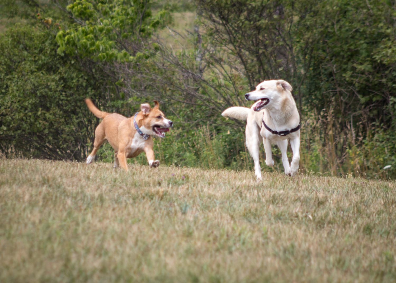 Canine Meadows2-13.jpg