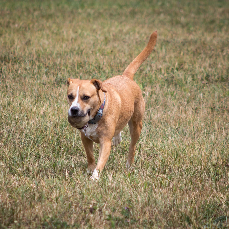 Canine Meadows2-14.jpg