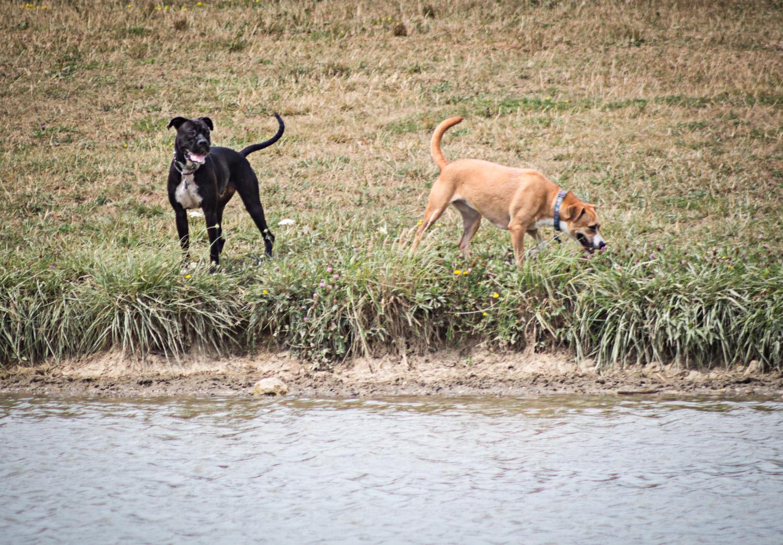 Canine Meadows2-18.jpg