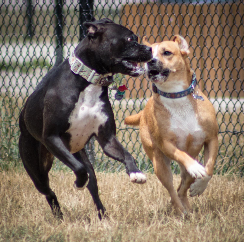Canine Meadows2-19.jpg