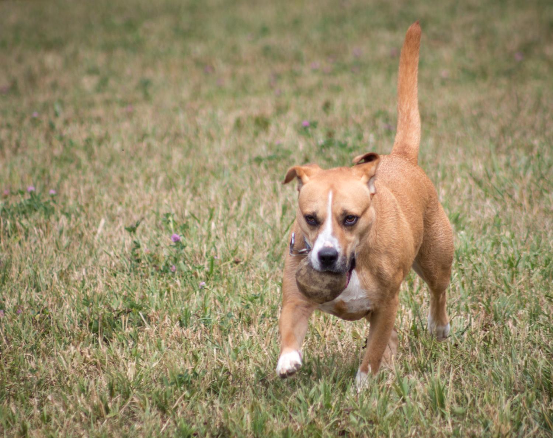 Canine Meadows2-22.jpg