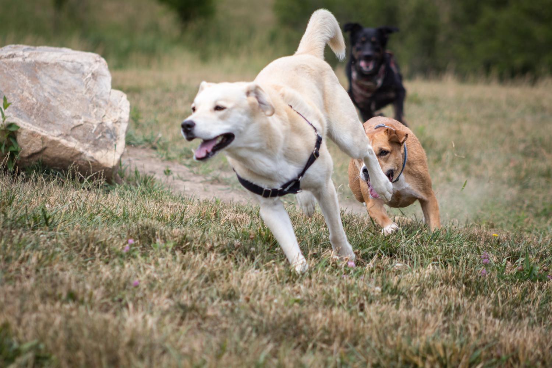 Canine Meadows2-23.jpg