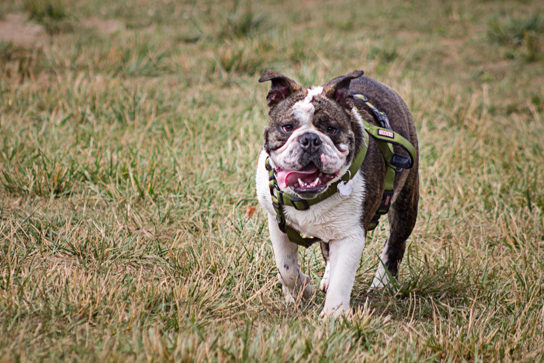 Canine Meadows2-21.jpg