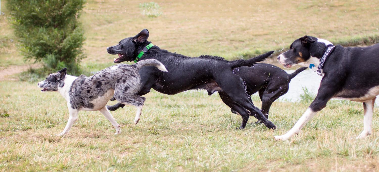 Canine Meadows-10.jpg