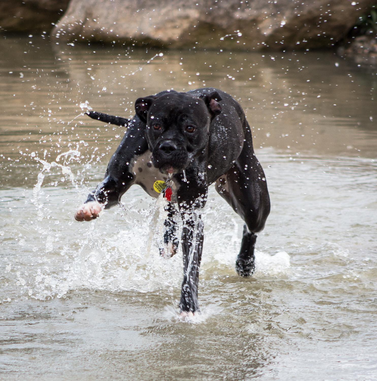 Canine Meadows3-7.jpg