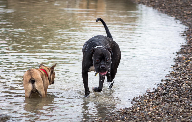 Canine Meadows3-10.jpg
