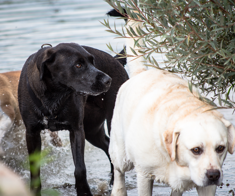 Canine Meadows3-15.jpg