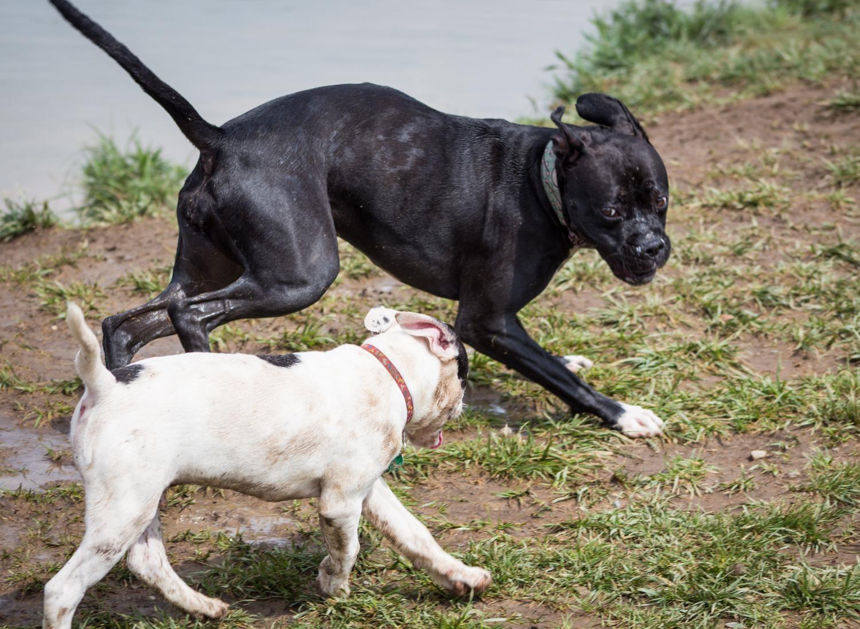 Canine Meadows3-26.jpg