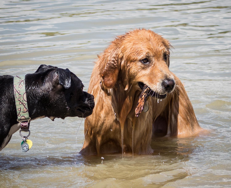 Canine Meadows3-36.jpg