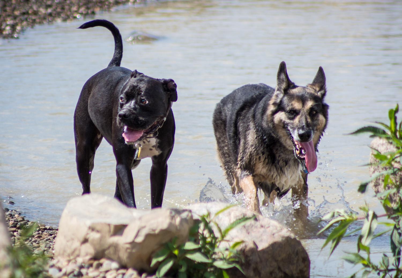 Canine Meadows3-42.jpg