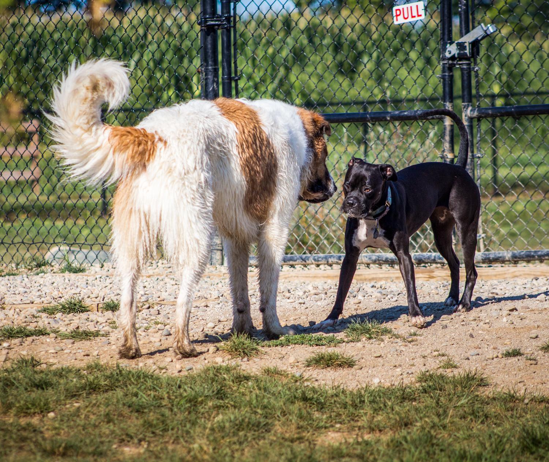 CanineMeadow_091416-101.jpg