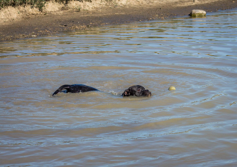 CanineMeadow_091416-105.jpg