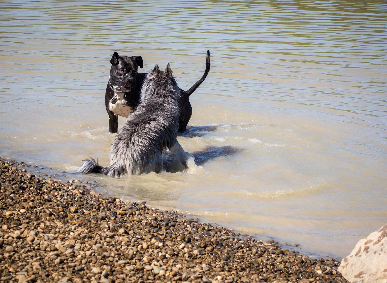 CanineMeadow_091416-110.jpg