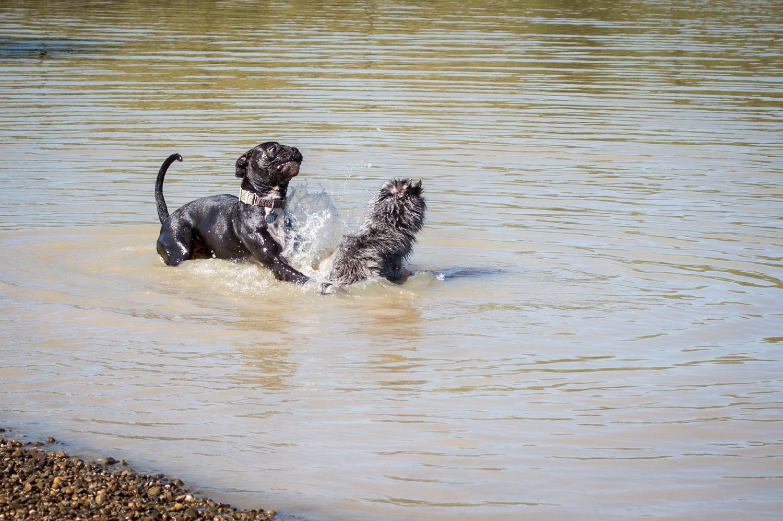 CanineMeadow_091416-111.jpg