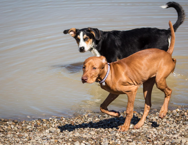 CanineMeadow_091416-114.jpg