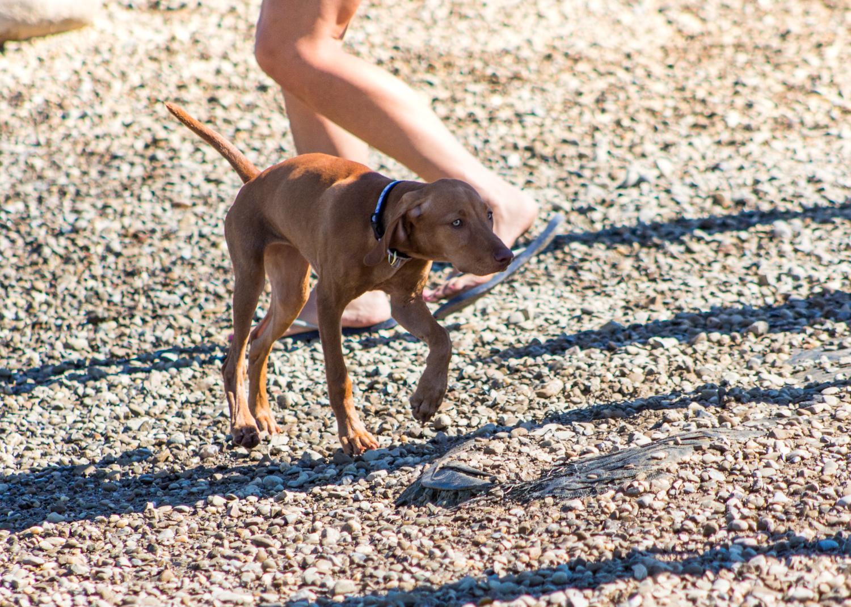 CanineMeadow_091416-113.jpg