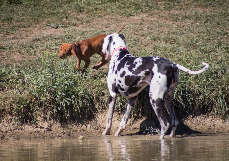 CanineMeadow_091416-115.jpg