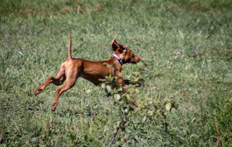 CanineMeadow_091416-119.jpg