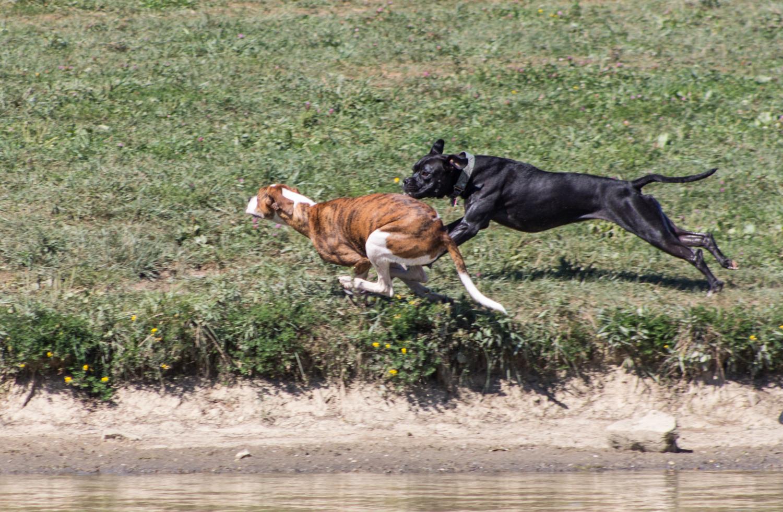 CanineMeadow_091416-120.jpg