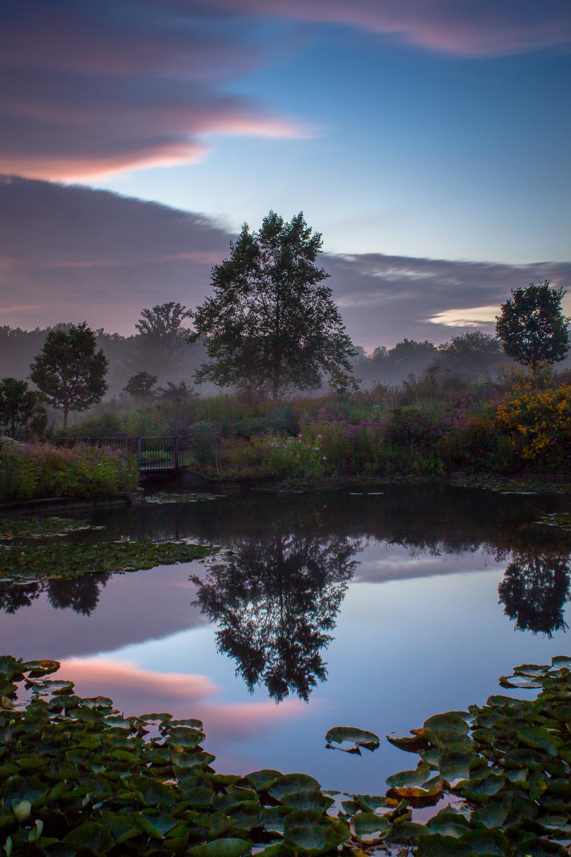 Garden in the Mist III