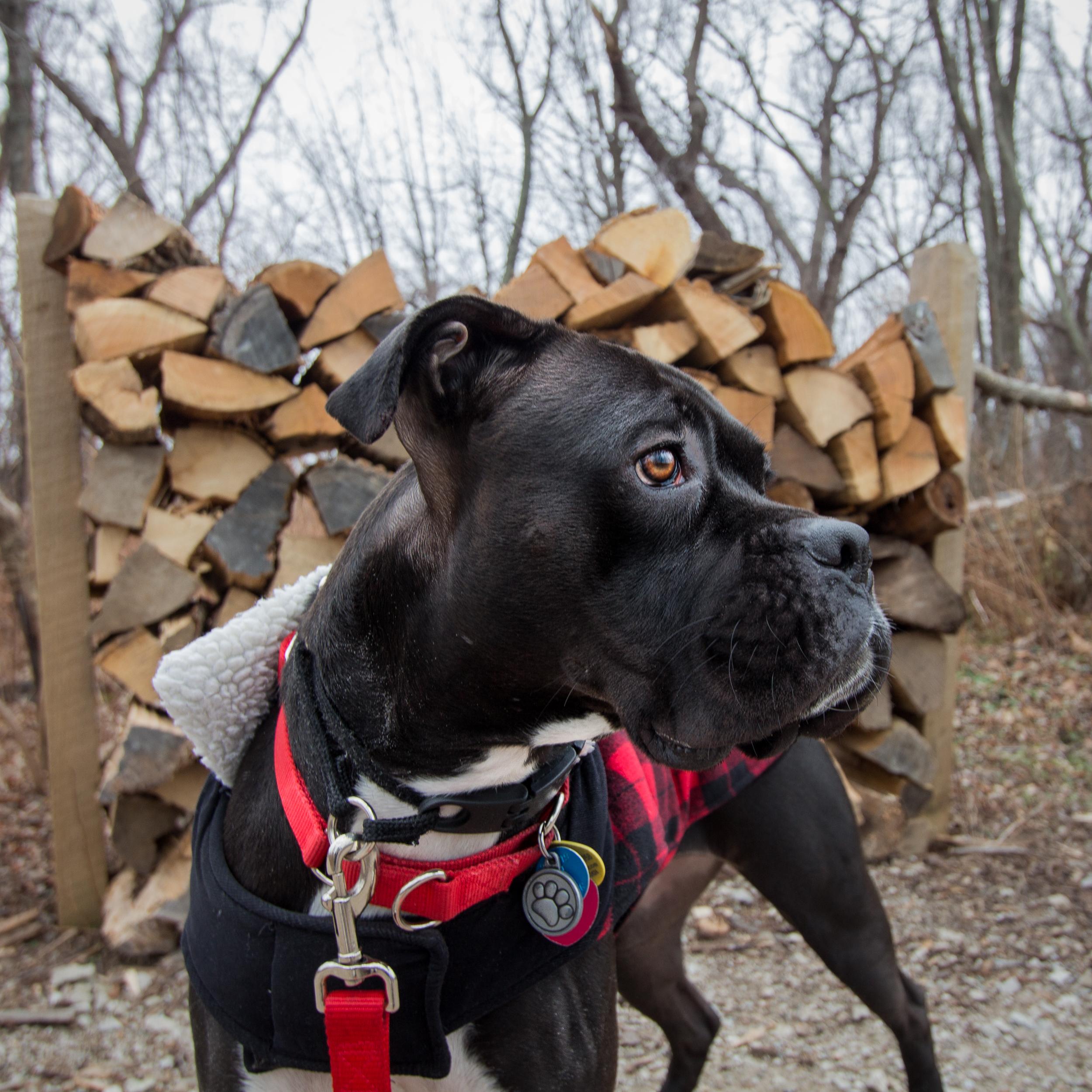 Bluffs_lumberjack-1.jpg